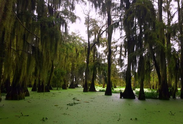 A swamp tour in Louisiana thumbnail