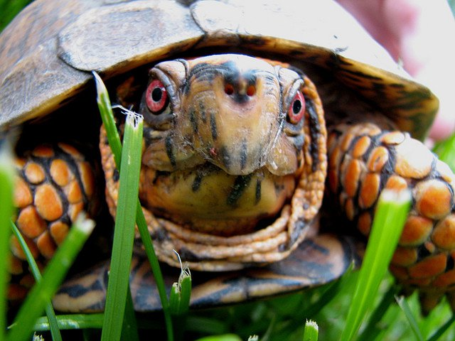 This box turtle is very disappointed in your flagrant disregard for turtlekind.