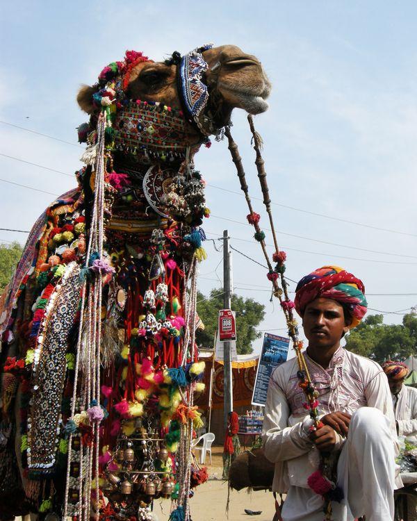 Camel and his master thumbnail