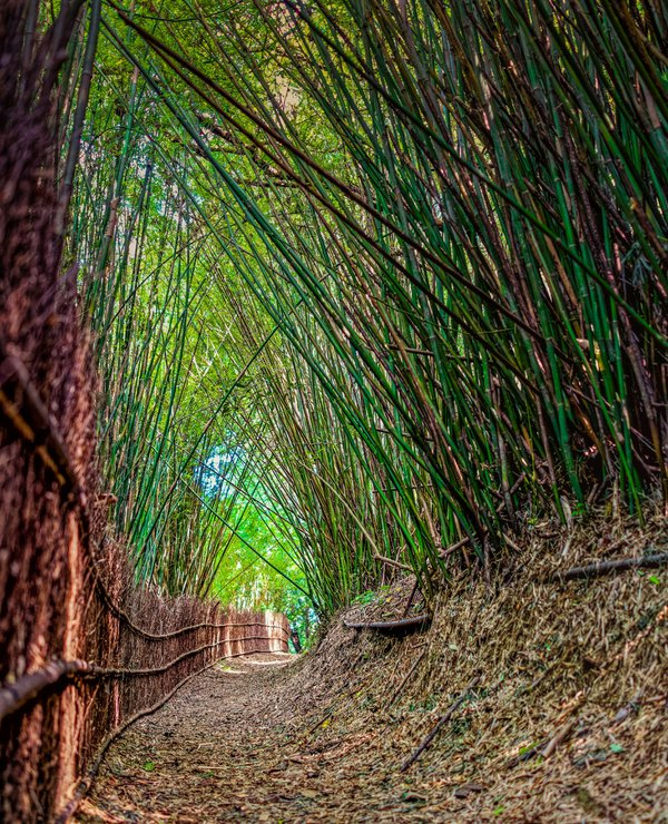 Bamboo Tunnel on Hengling Historic Trail thumbnail