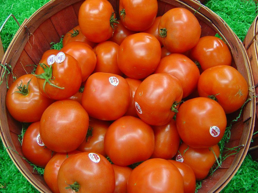 Fresh_tomatoes.jpg