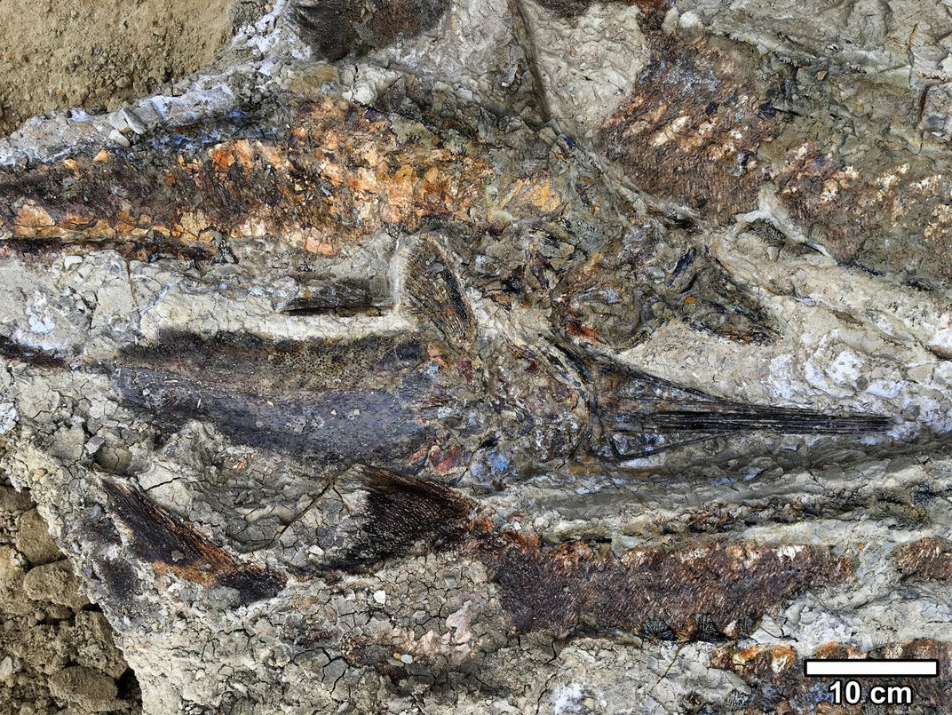Fossil Site May Capture the Dinosaur-Killing Impact, but It's Only the Beginning of the Story
