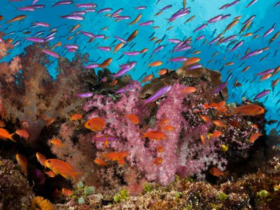 Recent research has shown that most scientific papers on coral biodiversity are led by people in high-income countries with few coral reefs.