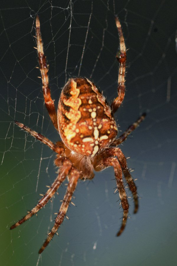 Izzy Bizzy Spider  thumbnail
