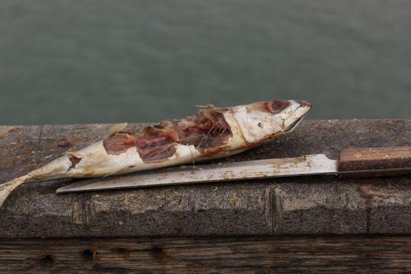Fish and Cut Bait thumbnail