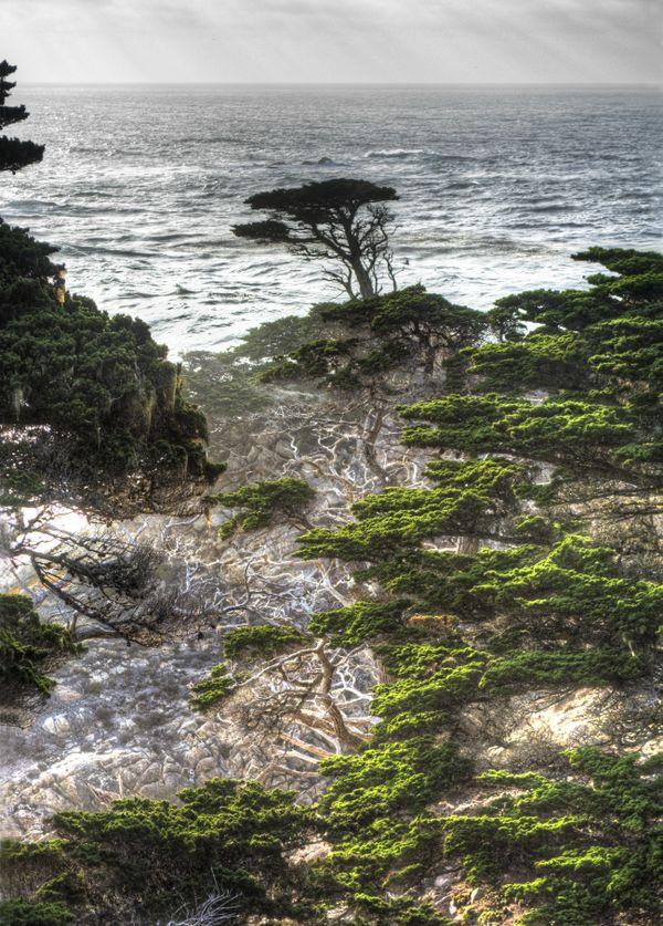 Lone Cypress - Point Lobos, California thumbnail