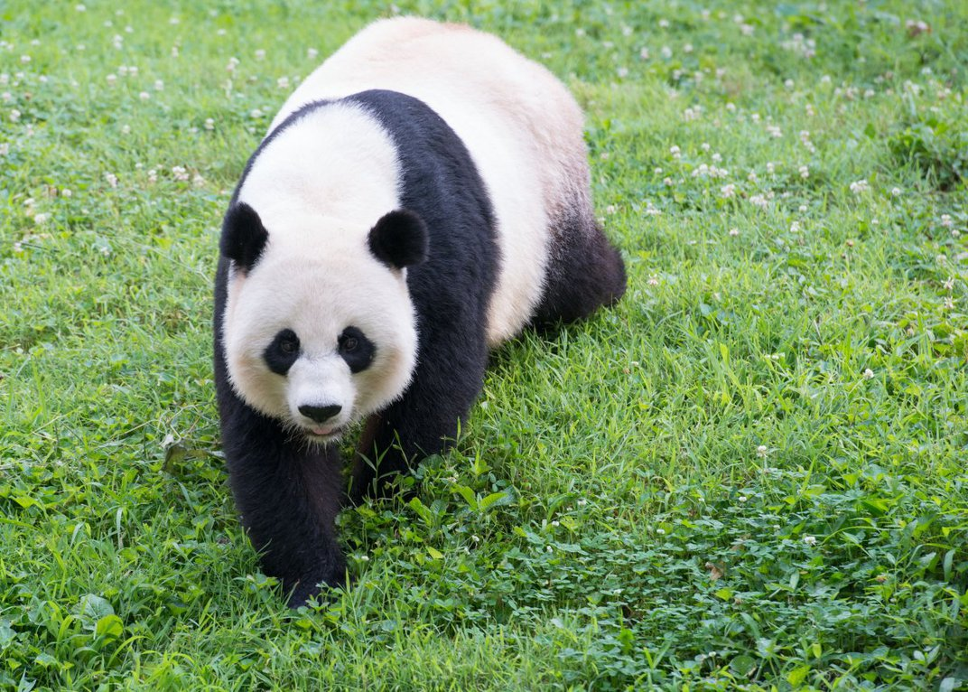 China charges zoos an annual fee of $1 million for every panda at the zoo.