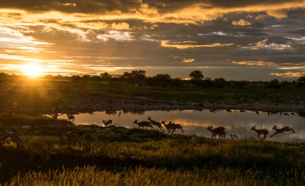 Sunset at Etosha watering hole thumbnail