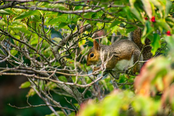 A Squirrel's Lunch thumbnail