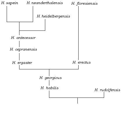 Homo Sapiens' Family Tree May Be Less Complicated Than We Thought