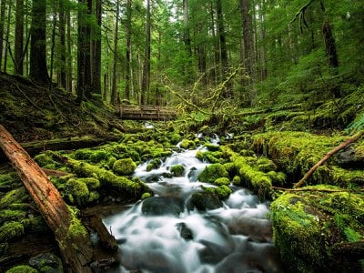 A creek runs by moss-covered rocks not far From Sol Duc Falls in Olympic National Park. Researchers have found that listening to natural sounds like running water may benefit human health.