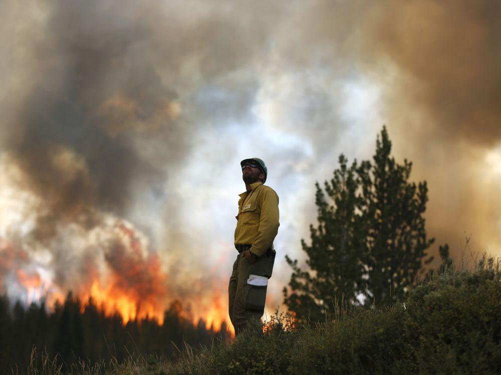 firefighter forest blaze