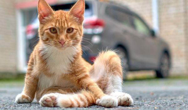 Funny ginger kitten thumbnail