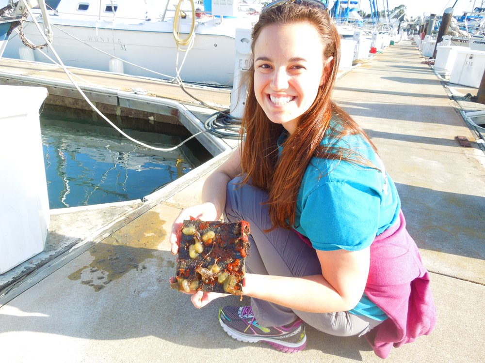 SERC marine biologist Brianna Tracy holds a plate with marine life pulled from a dock in San Francisco. (Credit: Kristen Minogue/SERC)