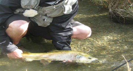 Andrew, bundled against the blazing sun, releases a big brown trout.