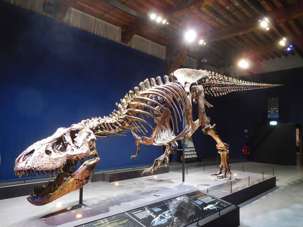 """The photo shows a T. rex specimen named """"Trix"""" on display at the Naturalis Biodiversity Center in Leiden"""