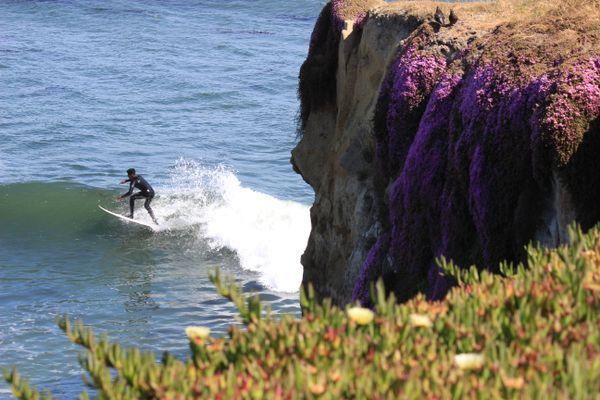 Surfing in Santa Cruz. thumbnail