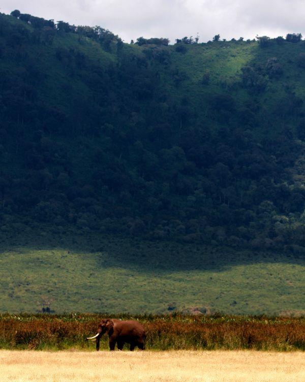 A lone elephant in Ngorongoro Crater, Tanzania thumbnail