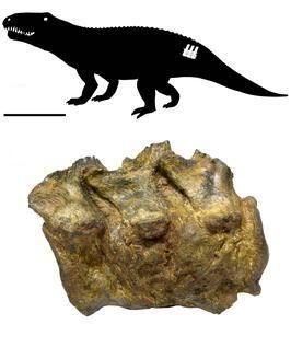 20110520083244archosaur-fused-vertebrae.jpg