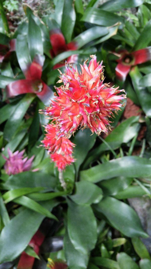 Vibrant flower thumbnail