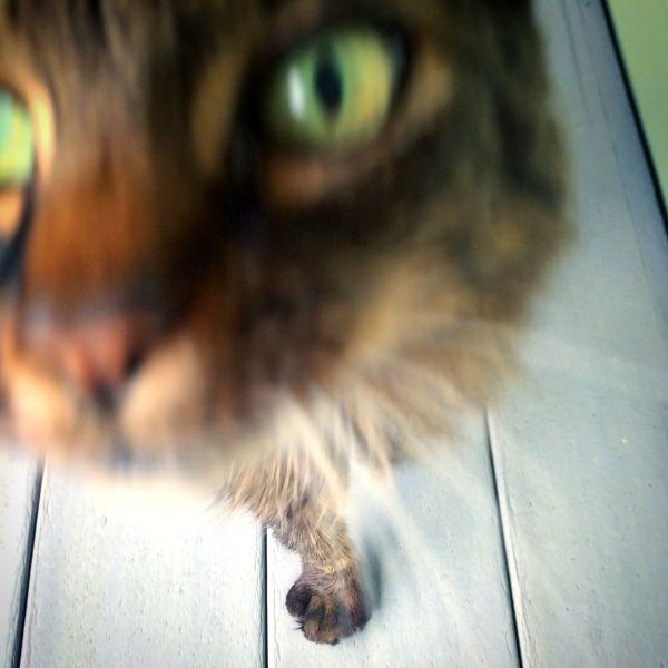 The Curious Cat thumbnail