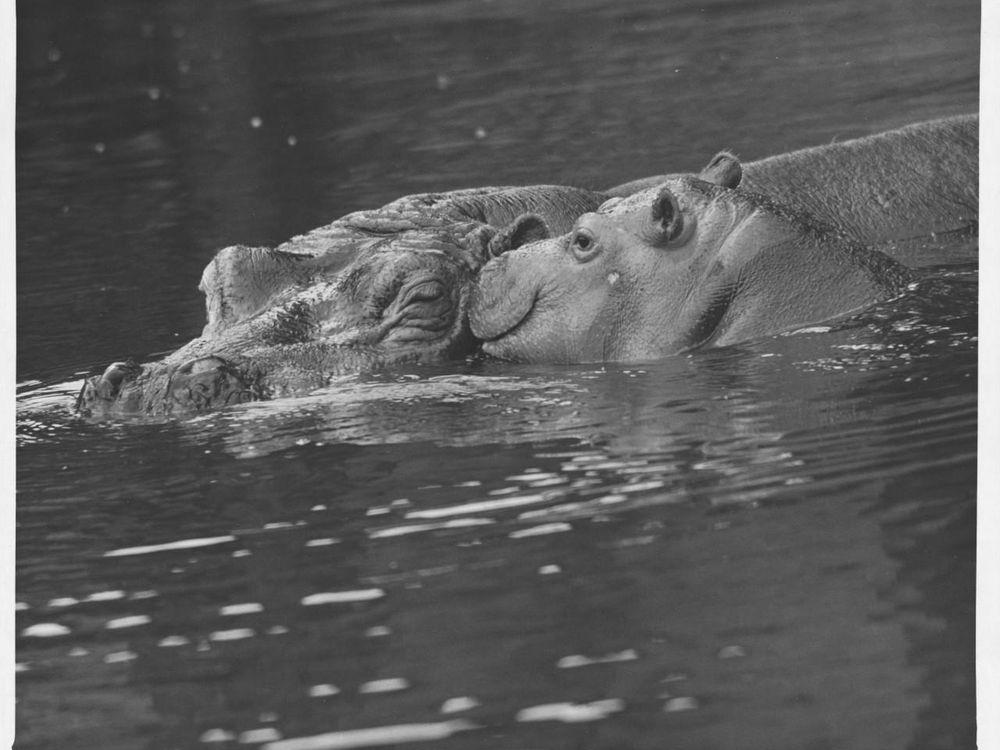 12_04_2014_hippo.jpg