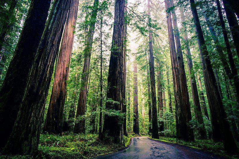 2013042311203304_23_2013_redwoods.jpg
