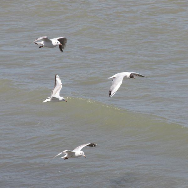 Seagulls thumbnail