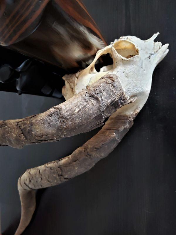 Skull Still 4 thumbnail
