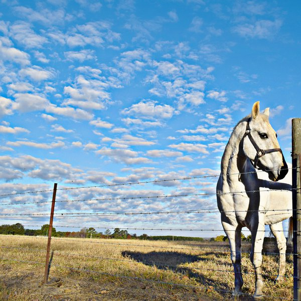 Beautiful horse saying Hi thumbnail