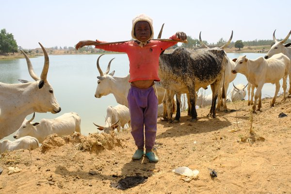 A Fulani boy and his cattle thumbnail