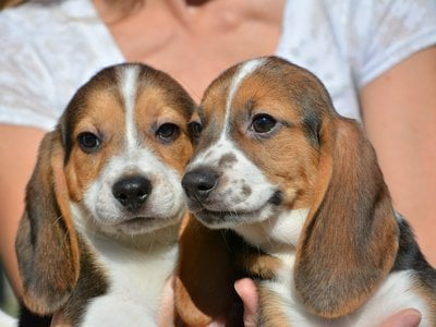 The IVF pups were more than 30 years in the making.