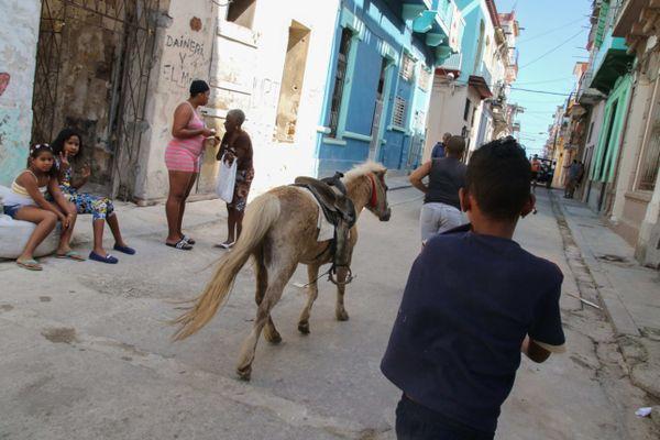 Havana # 2 thumbnail