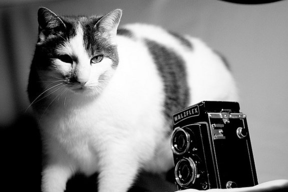 Director cat needs to adjust the composition.