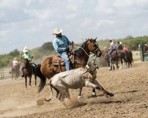 A team roper at the county fair thumbnail
