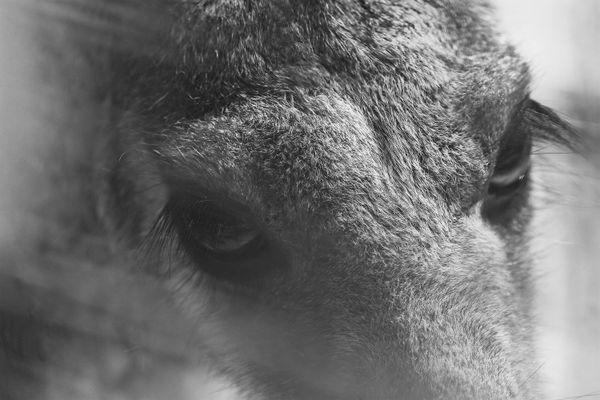 Kangaroo Zoo Eyes thumbnail