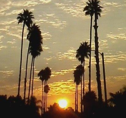 Sunrise between So Cal palms thumbnail