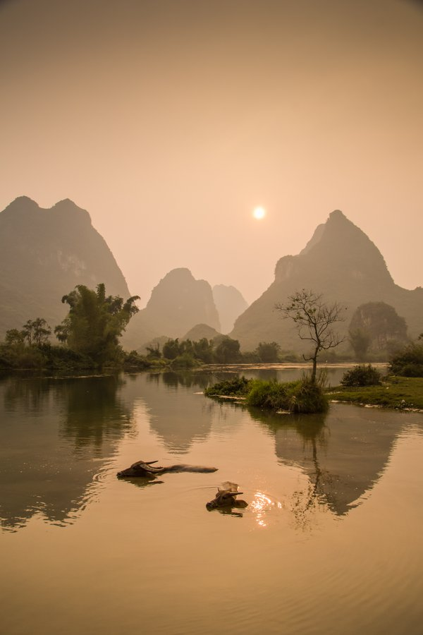 touring this farming community in the evening watchhing a couple of water buffalo swimming in the river in Guilin, China thumbnail
