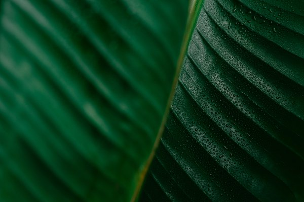 Leaves thumbnail
