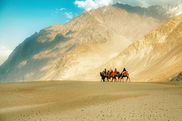 Tourists taking rides on bactrian camels at the Hundar sand dunes, Ladakh, India thumbnail
