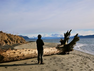 A beach in Juneau, Alaska. Sea levels in Alaska are not rising, but dropping precipitously due to a phenomenon known as glacial isostatic adjustment.