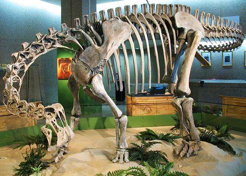 20110520083232nigersaurus-skeleton.jpg