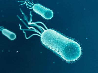 The bacterium Escherichia coli, shown here, moves itself with propeller-like structures called flagella; it is one of the mobile microbes scientists have linked to cargo-carrying structures to form biohybrid microrobots.