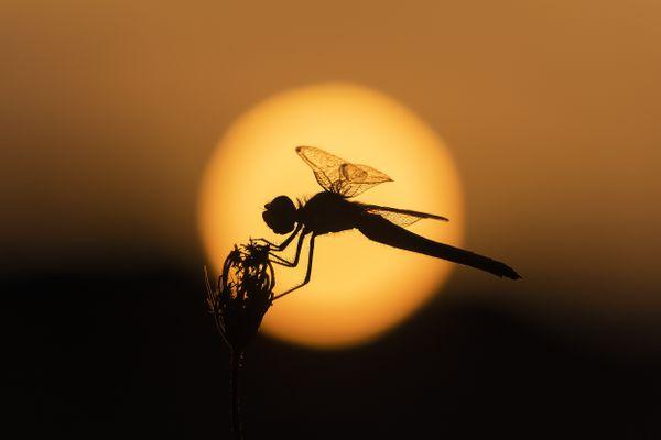 A fairy at sunset thumbnail