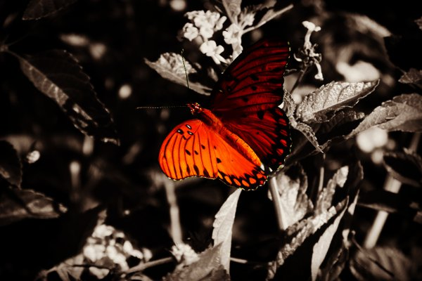 The Color of the Butterfly thumbnail