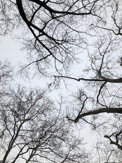 Looking Up to Winter Trees thumbnail