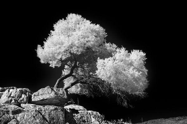 Tree and Rock thumbnail