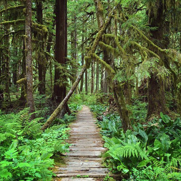 Rainforest Boardwalk thumbnail