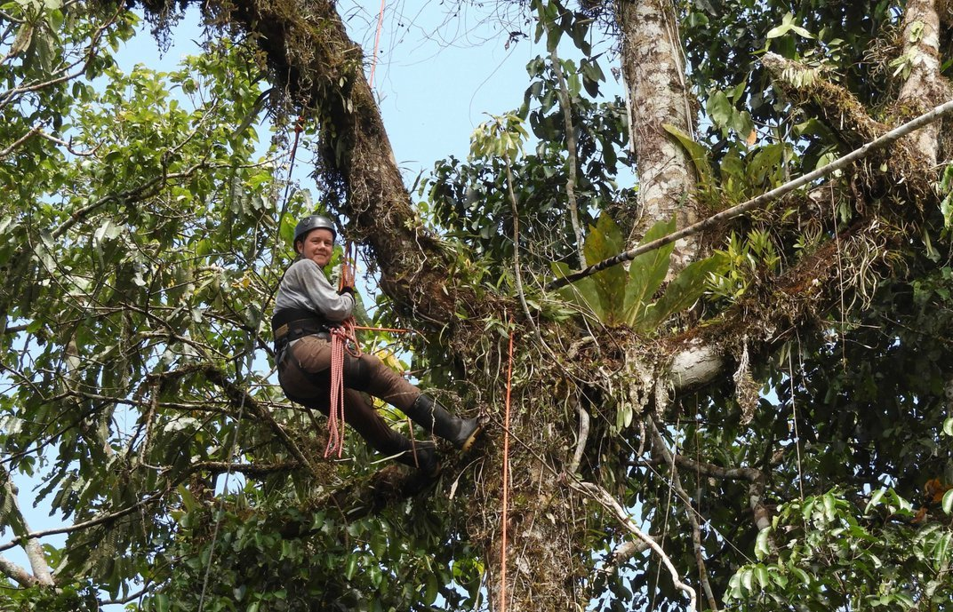 Conservation biologist Tremie Gregory climbs a tree in the Peruvian Amazon rainforest