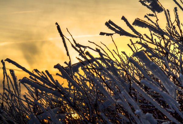 Rime Ice on the Grass at Sunrise on Roan Mountain thumbnail